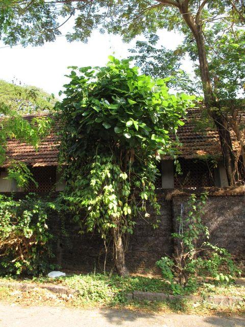 Image of Tree m054