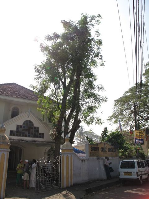 Image of Tree m055