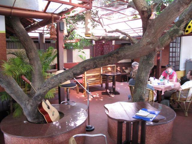 Image of Tree m056