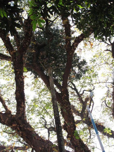 Image of Tree m061