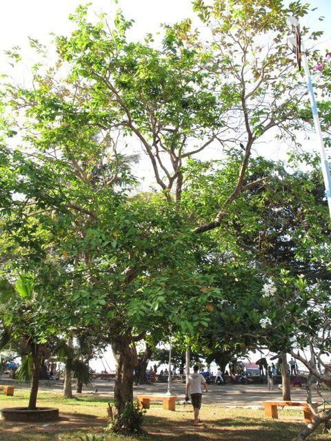 Image of Tree m062