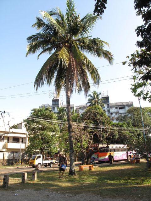 Image of Tree m063