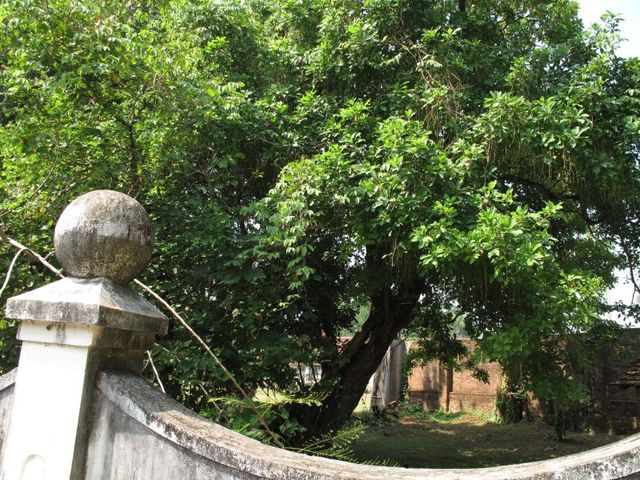 Image of Tree m068