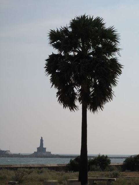 Image of Tree n003