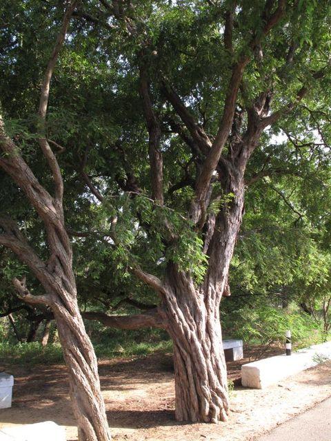 Image of Tree n004