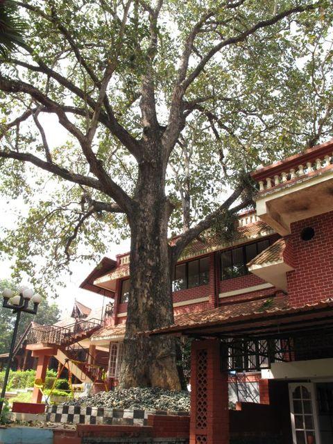 Image of Tree n009