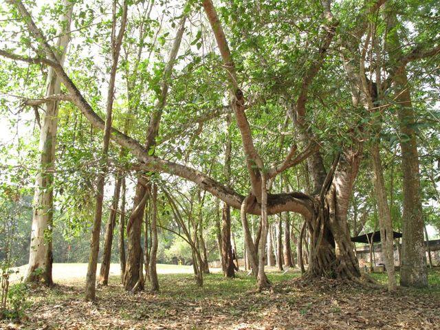 Image of Tree n010