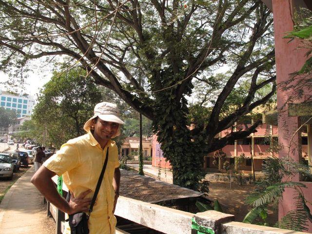 Image of Tree n011