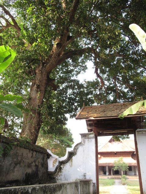 Image of Tree n013