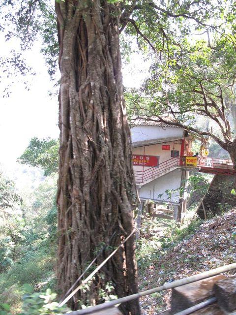 Image of Tree n018