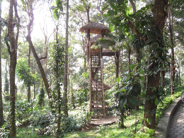 Image of Tree n020