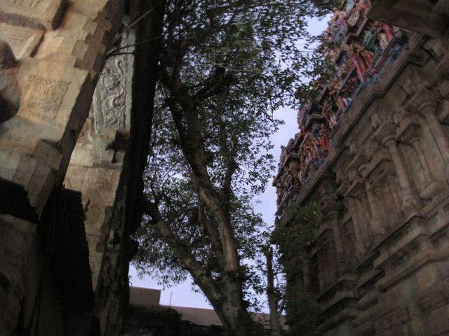 Image of Tree n026