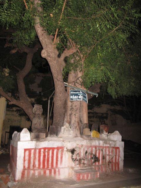 Image of Tree n028