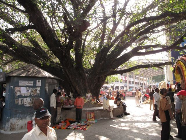 Image of Tree n034