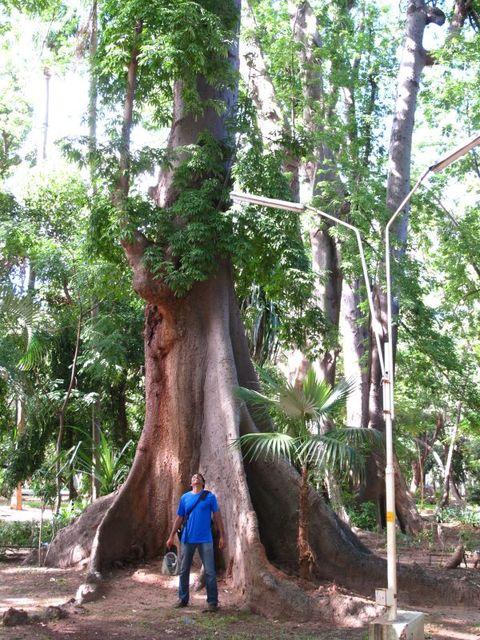 Image of Tree n037