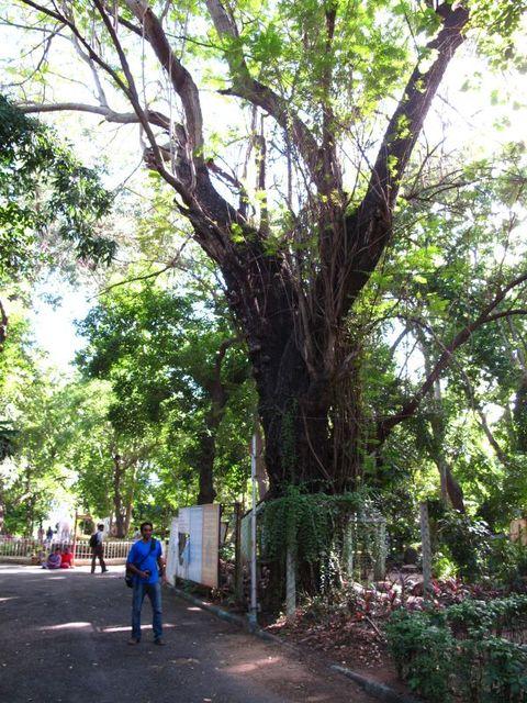 Image of Tree n039