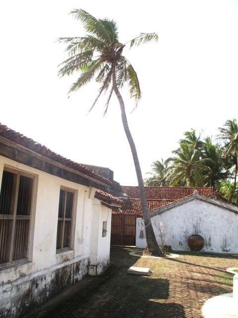Image of Tree n043