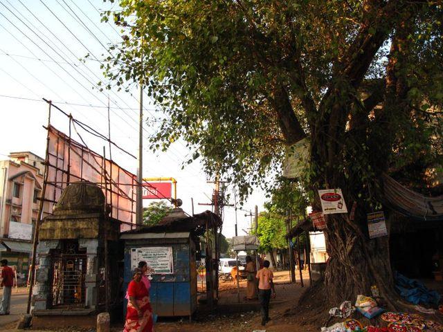 Image of Tree n048