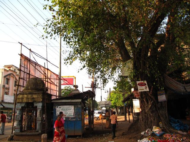 Image of Tree n049