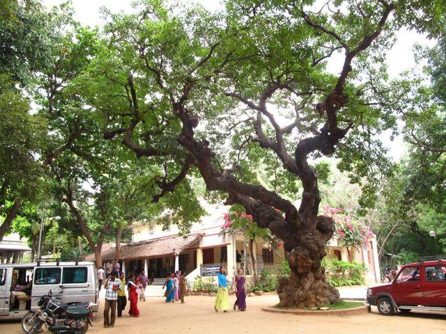 Image of Tree n050
