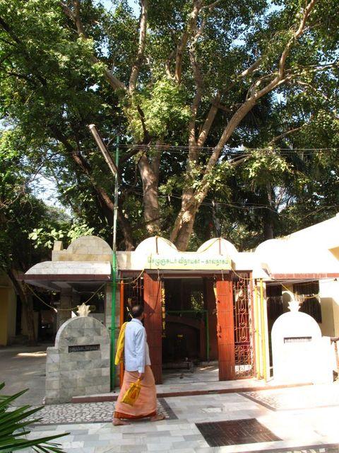 Image of Tree n052