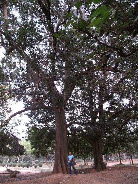 Image of Tree n053