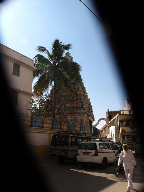 Image of Tree n054