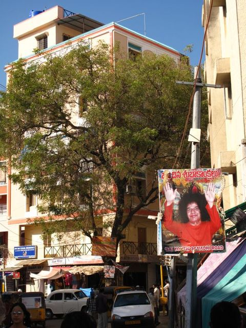 Image of Tree n056