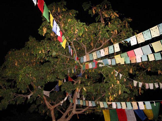 Image of Tree n057