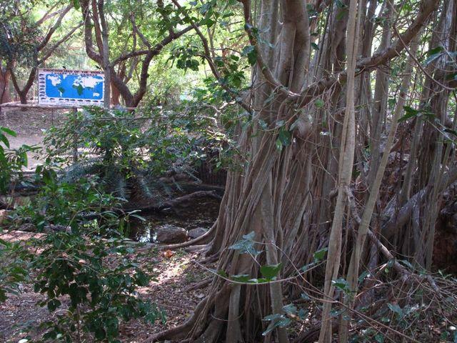Image of Tree o002