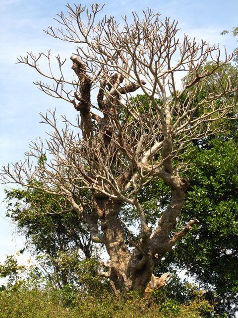Image of Tree o007