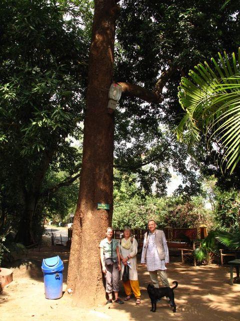 Image of Tree o008