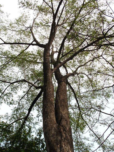 Image of Tree o009