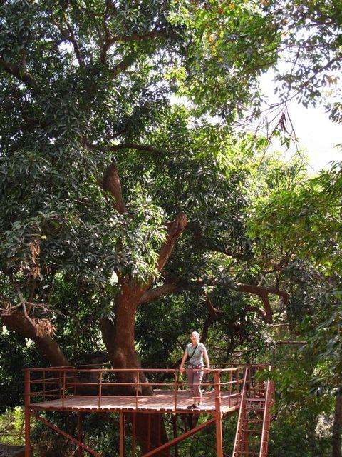 Image of Tree o010