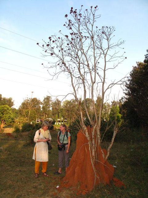 Image of Tree o013