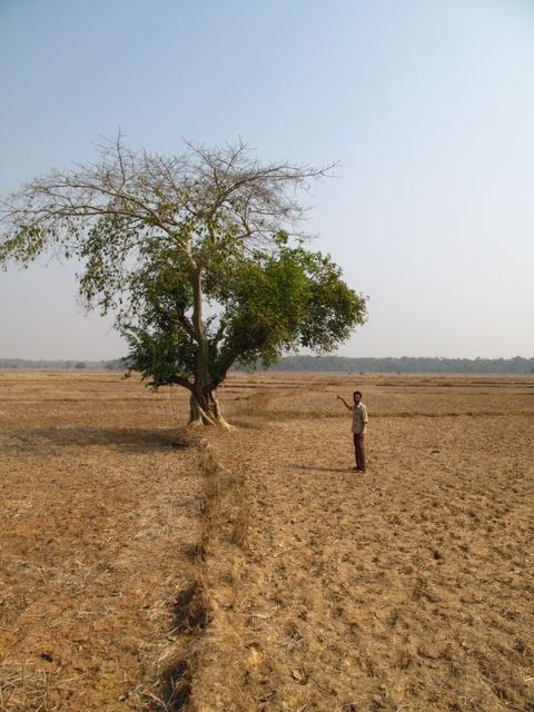 Image of Tree o021