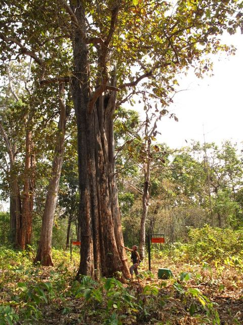 Image of Tree o023