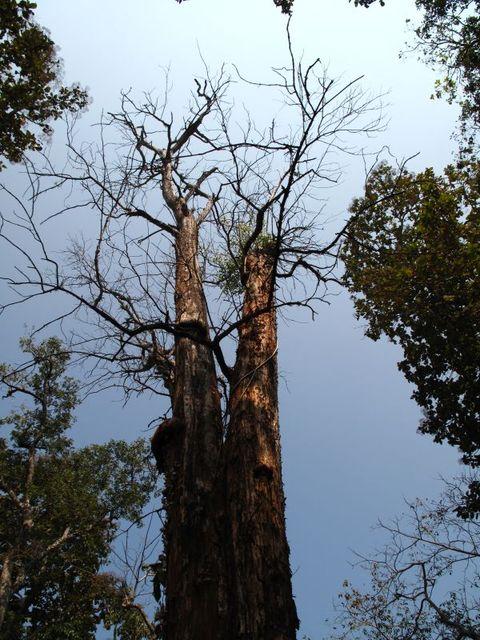 Image of Tree o025