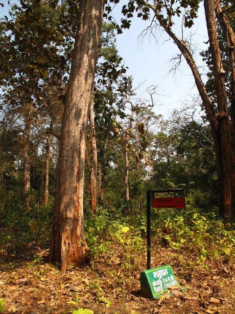 Image of Tree o026
