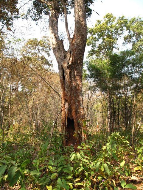 Image of Tree o027