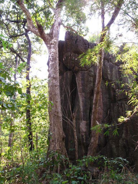 Image of Tree o028