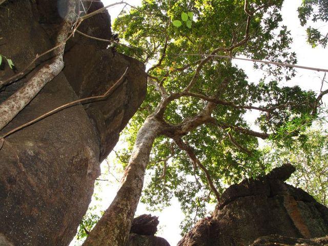 Image of Tree o029