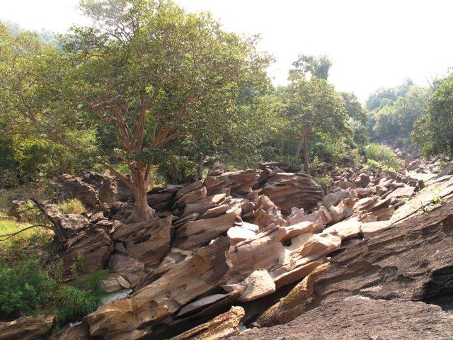 Image of Tree o031
