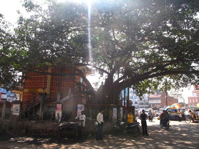 Image of Tree o042