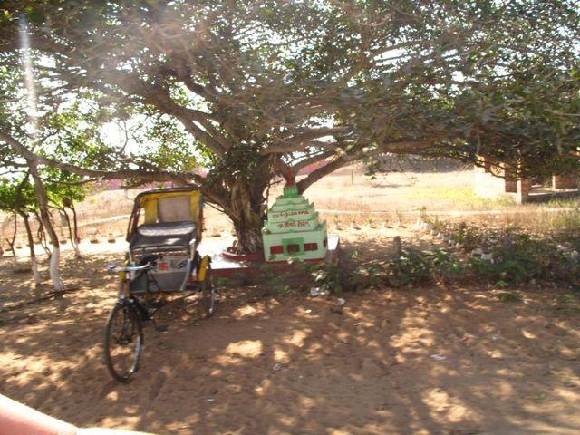 Image of Tree o046