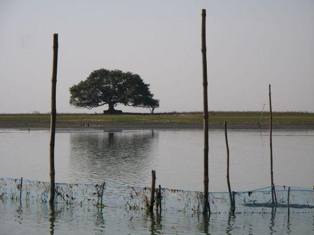 Image of Tree o050