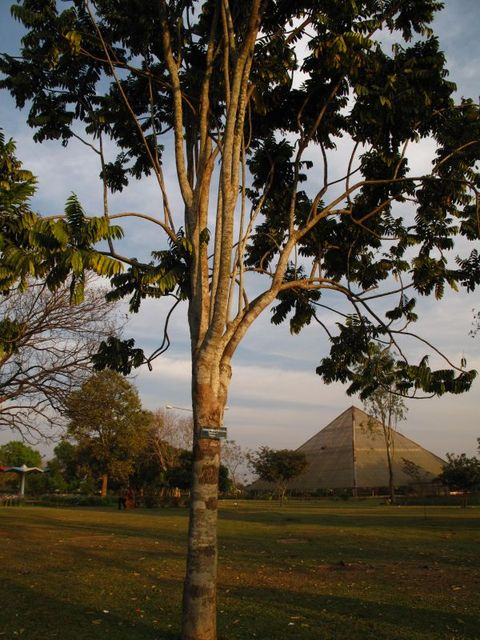 Image of Tree o055