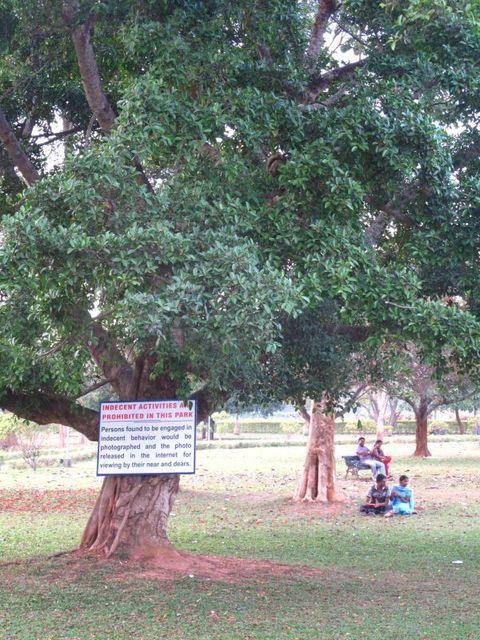 Image of Tree o056
