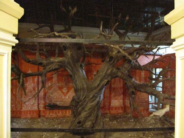 Image of Tree o057