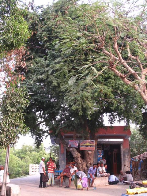Image of Tree p010